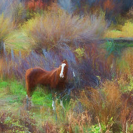 Jim Cook - Horse Of Many Colors