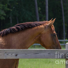 Horse Out To Pasture by Dale Powell
