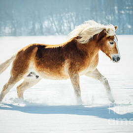 Anna Smolens - Horse Running in the Snow