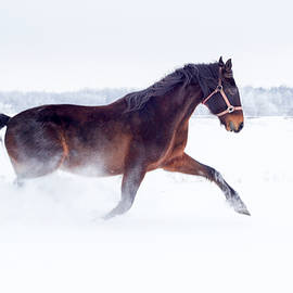 Nick Mares - Horse Running In The Snow
