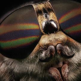Horsefly Face by Robert Storost