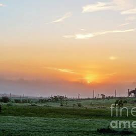 David Arment - Horses at Daybreak