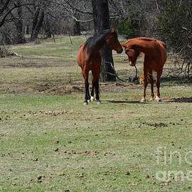 Horses Being Playful by Ruth Housley