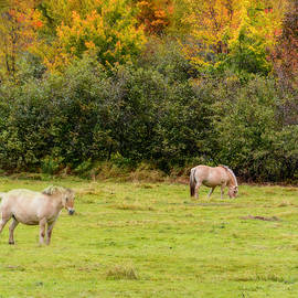 Ken Morris - Horses Enjoying a Beautiful Autumn Day
