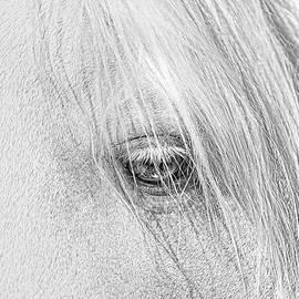 Horse's Eye Portrait Monochrome by Jennie Marie Schell