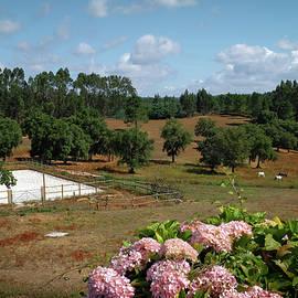 Horses in Landscape - Carlos Caetano