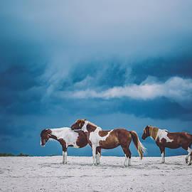 Anna Smolens - Horses on Stormy Beach