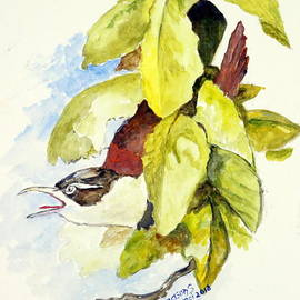 Horsfield's Babbler  by Jason Sentuf