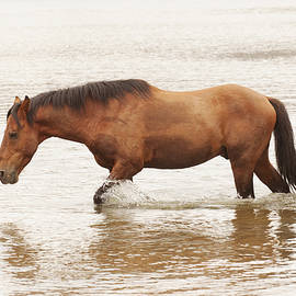 Horsing around at the river by Ruth Jolly