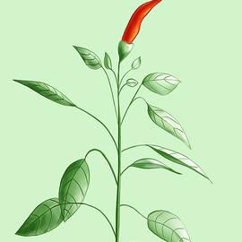 Boriana Giormova - Hot Chili Pepper Plant Botanical Illustration