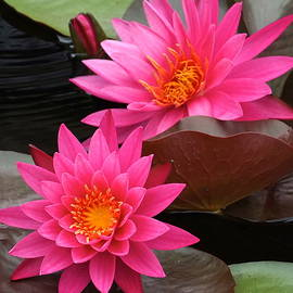 Hot Pink Twin Tropical Waterlily Charm by Byron Varvarigos