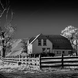 House and Cottonwoods by Maria Coulson