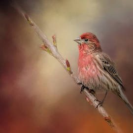 House Finch and New Blooms by Jai Johnson