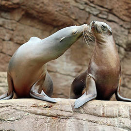 How About A Kiss? by Steve Gass