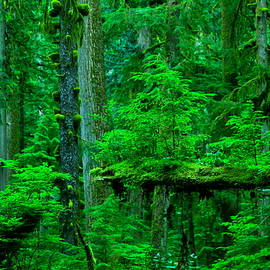 Jeff Swan - How nature persists