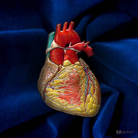 Human Heart Over Blue Velvet