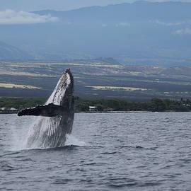 Humback Whale by Pamela Walton