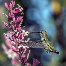 Tam Ryan - Humingbird 1081