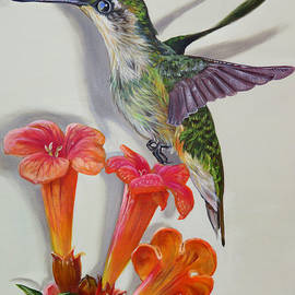 Hummingbird And A Trumpet Vine by Phyllis Beiser
