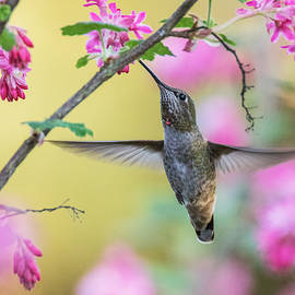Angie Vogel - Hummingbird in the Blooms