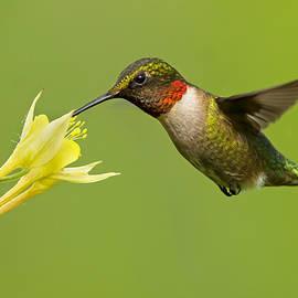 Mircea Costina Photography - Hummingbird