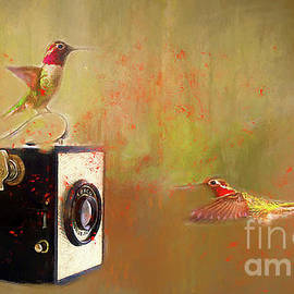 Darren Fisher - Hummingbird Photo Shoot
