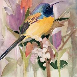 Shane Guinn - Hummingbird