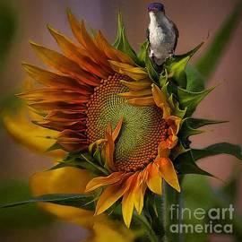 John  Kolenberg - Hummingbird Sitting On Top Of The Sun
