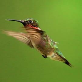Geraldine Scull - Hummingbird watching
