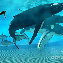 Humpback Dive