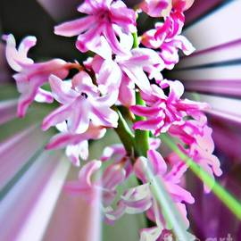 Leanne Seymour - Hyacinth Glory