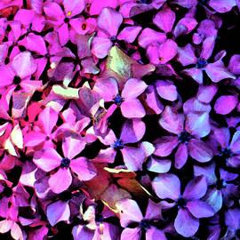 Hydrangea Art by Cynthia Guinn