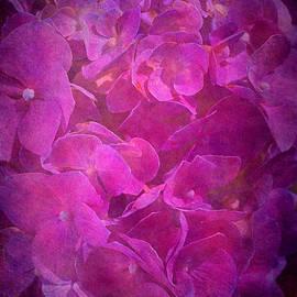 Hydrangea Textured in a Pink Light by Joy Watson