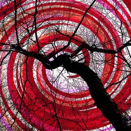 Shawna Rowe - Hypnotic Nature