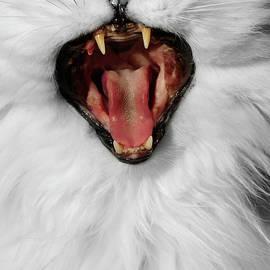 I Am Ferocious by Elisabeth Lucas