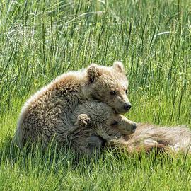Belinda Greb - I Got Your Back - Bear Cubs, No. 4