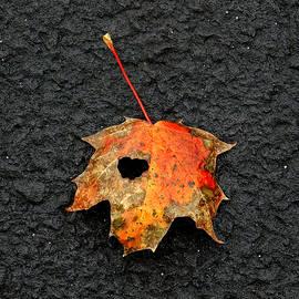 I Heart Fall by Lori Pessin Lafargue
