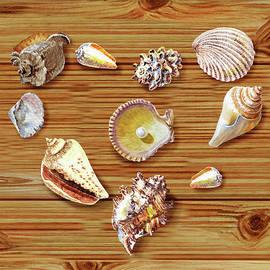 Irina Sztukowski - I Heart Seashells