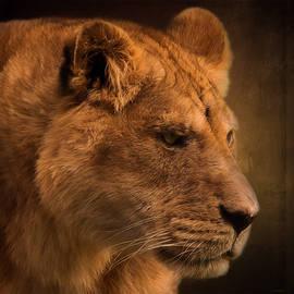 I Promise - Lion Art by Jordan Blackstone