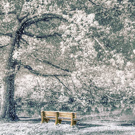 I Will Wait for You in Winter by Debra and Dave Vanderlaan
