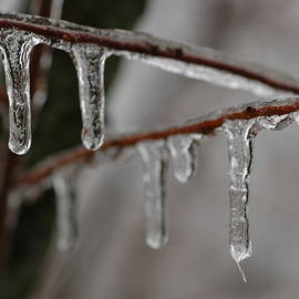 Kathy Carlson - Ice-covered Branches
