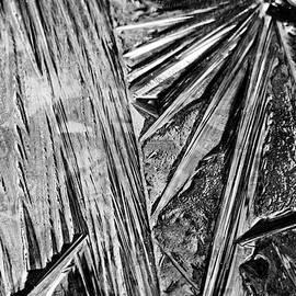 Debbie Oppermann - Ice Patterns Black And White