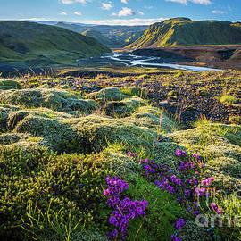 Inge Johnsson - Iceland Moss