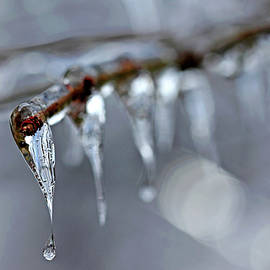 Debbie Oppermann - Icicles