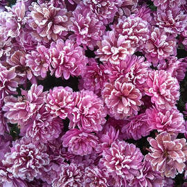 Johanna Hurmerinta - Icy flowers