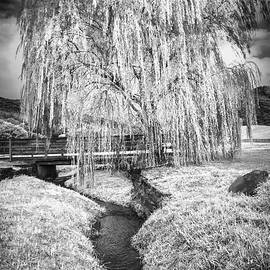 Icy Tree in the Meadow Black and White by Debra and Dave Vanderlaan