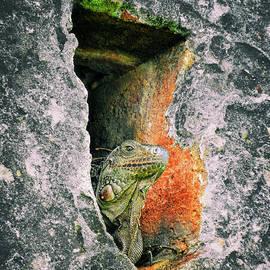 Kasia Bitner - Iguana Guard