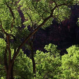 Bob Cuthbert - Illuminated Trees of Zion