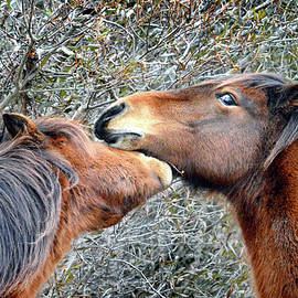 I'm The Boss Says Patricia Irene To April Star by Assateague Pony Photography