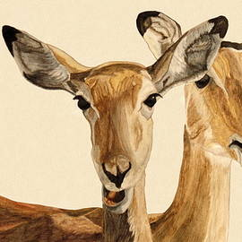 Angeles M Pomata - Impalas watercolor